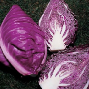 Cabbage Kalibos Red -Pointed - Appx 540 seeds